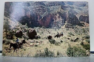 Arizona AZ Grand Canyon National Park Bright Angel Trail Mule Train Postcard Old
