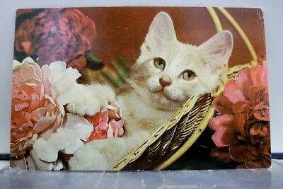 Animal Cat Kitten Purring Tranquility Postcard Old Vintage Card View Standard PC