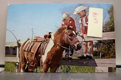 Animal Horse Ride Hime First Postcard Old Vintage Card View Standard Souvenir PC