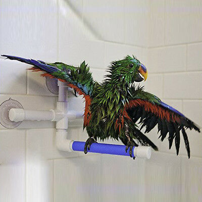 Birds Parrot Shower Perches Standing Perch Window Wall Suction Cup Toys Paw