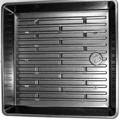 """10 Pack Planting/Germination Sprouting Trays 10"""" x 10"""" 2.25""""  Wheatgrass Sprouts"""