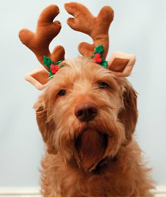 Cupid & Comet Festive Reindeer Antlers Novelty Christmas Costume For Dogs