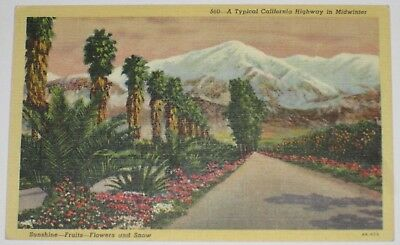 A Typical California Highway in Midwinter Postcard, Never mailed Unposted