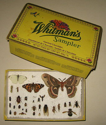 Student's Insect collection 33 Specimens from Eastern USA Bug Prop Child Kit Box