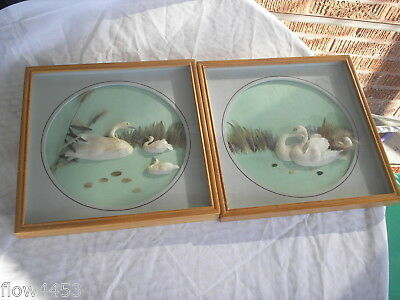 Vintage Pair Of 3D White Swans And Baby Pictures With Real Feathers And Framed