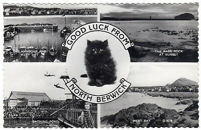 Postcard Multiview Black Cat Good Luck North Berwick Inc. Pool & Harbour 1961 RP