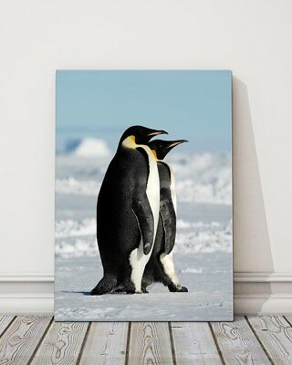 two penguins blue and white black colours printed framed canvas picture