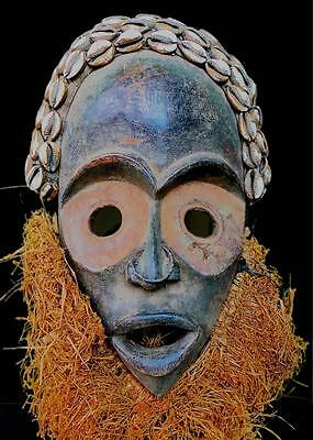 Fine Tribal Dan Bagle Mask With Cowries Coted'ivoire  BN15