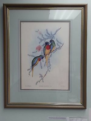 John Gould Splendid Grass-Parrakeet British Museum Official Limited Framed Print