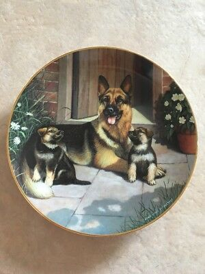 German Shepherd Collectible Plate By Danbury Mint A Proud Mother By Fitzgerald