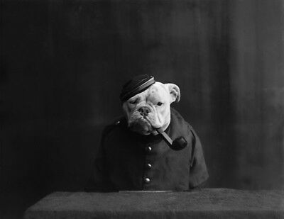 MISTER BULLDOG 1900s PHOTO