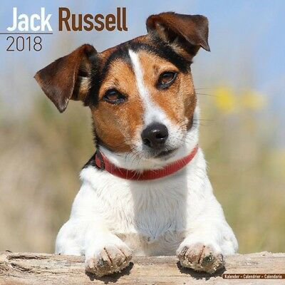 Calendrier Jack russell 2018