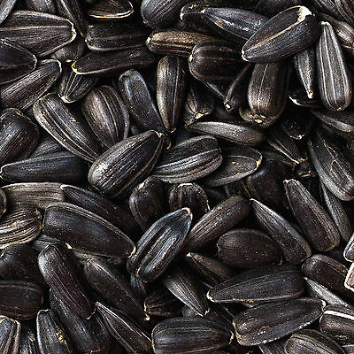 60Kg (4x 15Kg) Black Sunflower Seeds Wild Bird Food Deal **NOT 20KG 25KG 30KG**