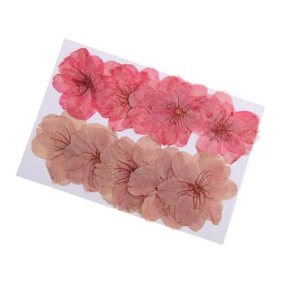 10pcs Beautiful Pressed Dried Sakura Flowers Cherry Blossom for Scrapbooking
