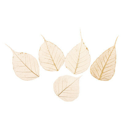 5pcs Pressed Dried Linden Leaves Flower Embellishments for Card Making Craft