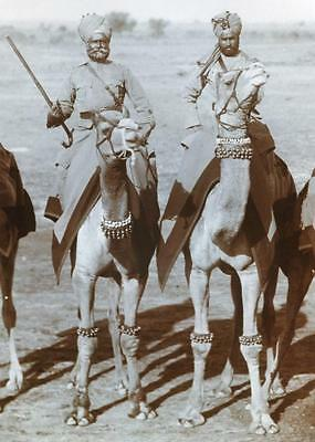 Officers of the Camel Corps Mounted on Camels Photograph 1910 British Empire