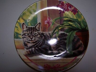 Cat in the Window Decorative Plate