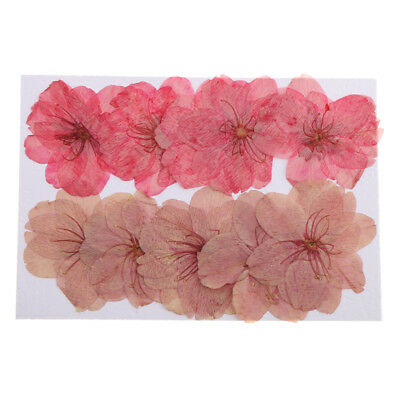 10pcs Pressed Dried Cherry Blossom Flower Embellishments Card Making Crafts