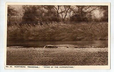 D7787ldd South Africa Northern Transvaal Hippotomus c1930 vintage postcard