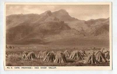 E2752ldd South Africa Cape Province Hex River Valley c1930 vintage postcard