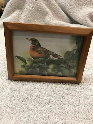 Small Wooden Framed Robin Print Sitting On An Apple Tree Glass Front