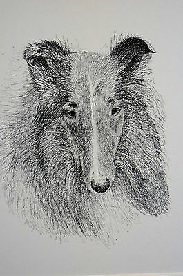 Francis Wardle 1935 ROUGH HAIRED COLLIE Vintage DOG Print Matted