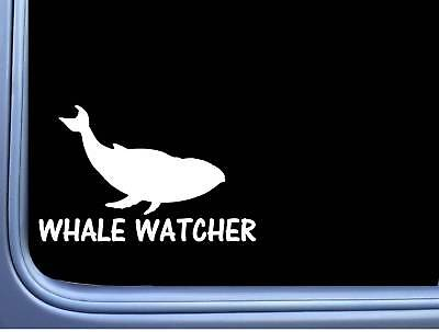 Whale Watcher L818 8 inch Sticker marine life humpback moby Decal