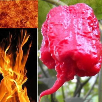 Garden Plant 10 Carolina Reaper Seeds Seed HP22B Hottest pepper on Earth
