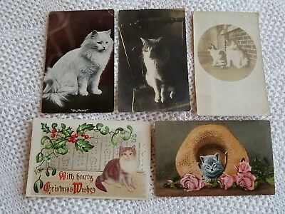 5 VINTAGE, 4 REAL PHOTO, CATS AND KITTENS POST CARDS includes Mitchell & Robbins