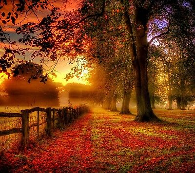Country Landscape - Autumn Trees Field Sunset Poster & Canvas Picture Prints