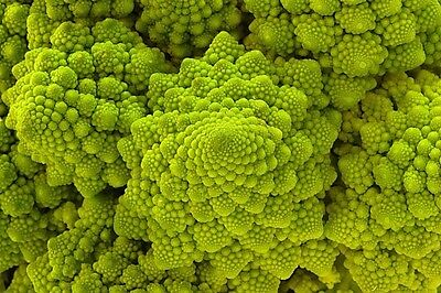 ROMANESCO 200 seeds Cauliflower x Broccoli.    RARE