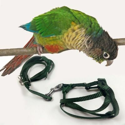 Parrot Bird Leash Outdoor Adjustable Harness Training Rope Anti Bite Flying Band