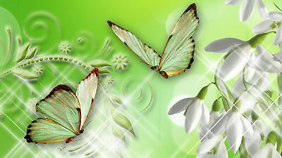 butterfly photo 3x5