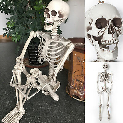 170cm Human Skeleton Life Size Skull Full Body Anatomy Model Halloween Medical D