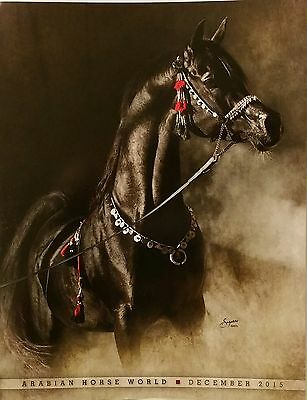 Oversized Named Arabian Stallion Black Horse Brochure Magazine Ad Card Photo New