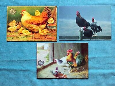 3 Vintage Chickens Poultry Pigeons Postcards - 2 Unused