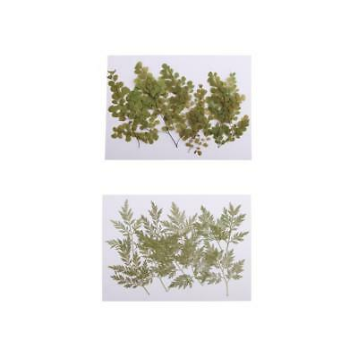 20x Pressed Dried Flower Dry Leaves For Resin Jewelry Craft DIY Card Making
