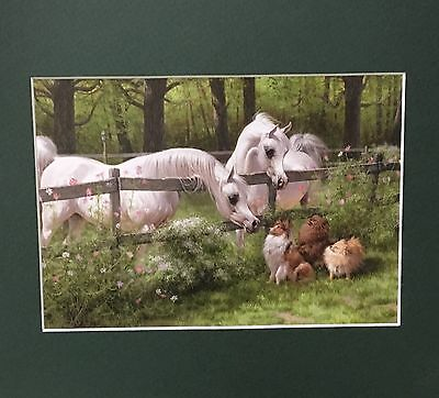 New Matted Gray Arabian Horse Print Stallion Sheltie Pomeranian Mary Haggard