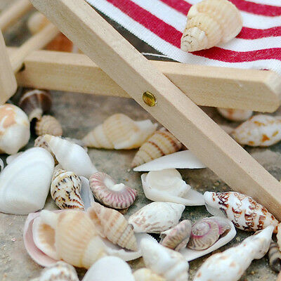 Approx 40pcs Beach Mixed SeaShells Mix Aquarium Decor Sea Shells Craft AU