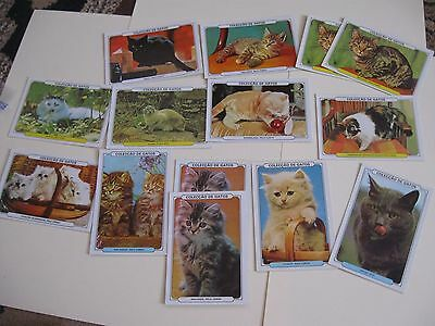 22 vintage Portuguese glossy cat pocket calendars 1986