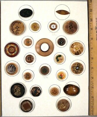 TRAY OF 24 ANTIQUE BUTTONS, Assorted VEGETABLE IVORY, Some SCARCE Examples