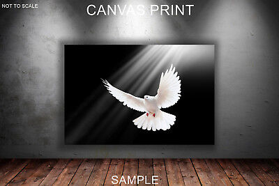 White pigeon spread wings - CANVAS PRINT READY TO HANG or ROLLED FROM A4