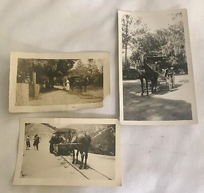 Victorian Horse Buggy Carriage Photograph Lot Of 3 Photo 1890's Antique Sepia