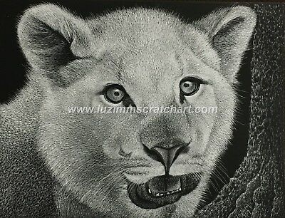"$20.00 OFF -Wildlife Lion Tiger Puma  ORIGINAL Scratchboard Art 8.5""x11""  by LVZ"