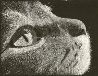 "$25.00 OFF - Animal Cat Dog ORIGINAL Scratchboard 8.5""x11"" by LuZimm"