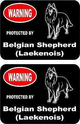 2 protected by Belgian Shepherd (Laekenois) dog home window vinyl stickers #a
