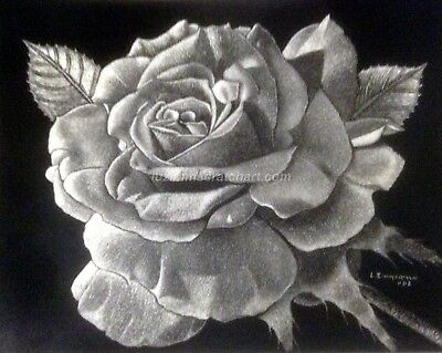 "$40.00 OFF - Nature White Rose Flower ORIGINAL Scratchboard 11""x14"" by LVZimm"