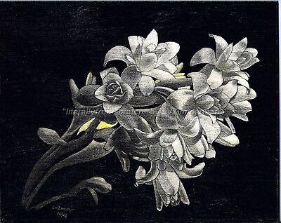 $40.00 OFF - Nature Flower Tuberose ORIG Scratchboard 8x10x1/8 Ampersand by LVZ