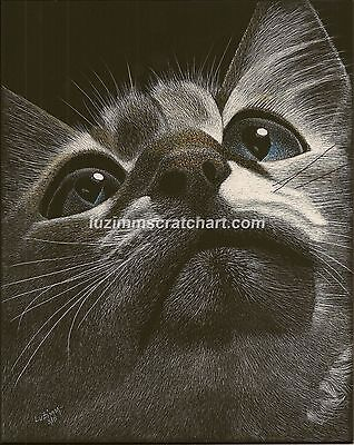 $45.00 OFF - Animal Pets Cat Dog ORIGINAL Scratchboard Art 8x10x1/8 by LVZimm