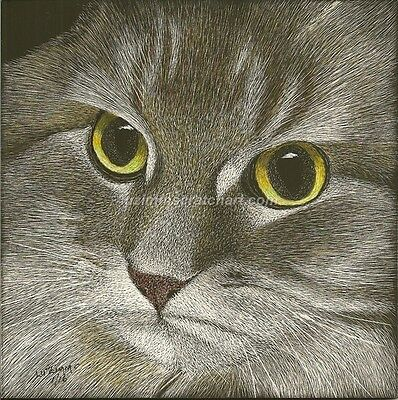 "$15.00 OFF - Animal Maine Coon Cat  ORIGINAL Scratchboard Art 6""x6""x1/8"" by LuZ"